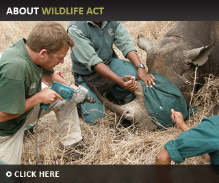 About Wildlife ACT